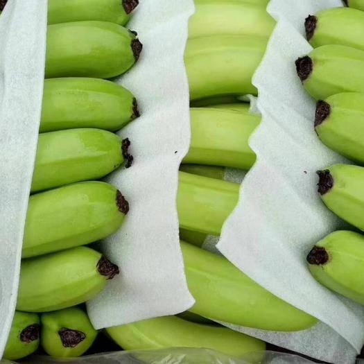 北京菲律宾香蕉 七成熟