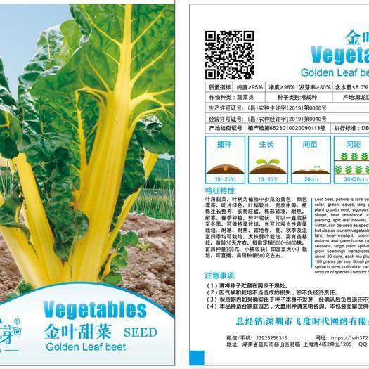 益阳赫山区甜菜种子 金叶 黄甜菜 君达菜