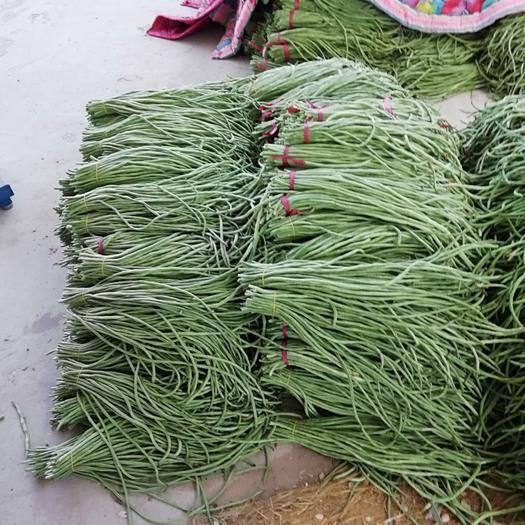安陽滑縣長豇豆 40cm~70cm