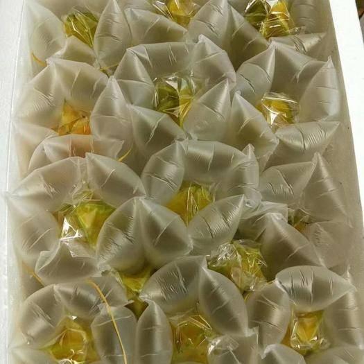 漳州南靖縣 泰國軟枝大楊桃3斤5斤非10斤電商團購一件代發