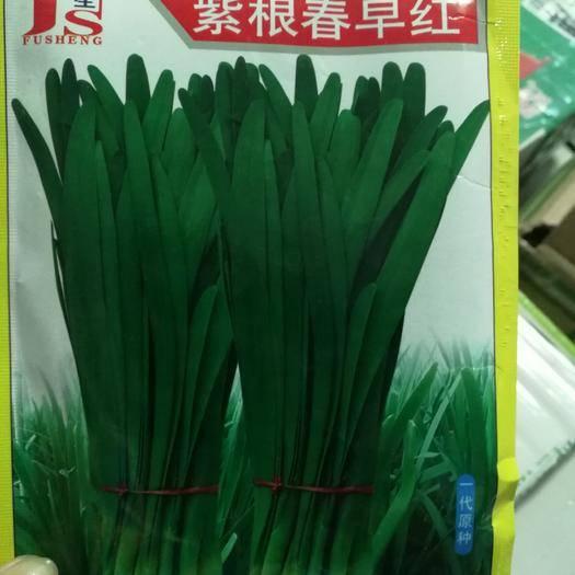 夏邑縣 紫根春早紅韭菜種子  250克一袋