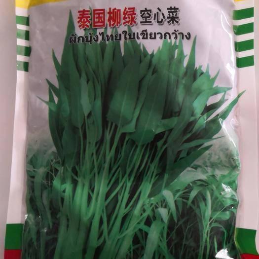 商丘夏邑县 泰国柳叶空心菜种子,进口种子,生长速度快,纤维少