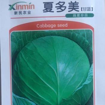 绿甘蓝种子 杂交种 ≥90%