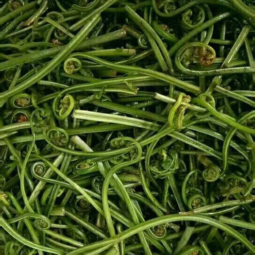 撫州資溪縣水蕨菜 鮮貨