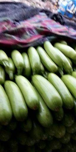 聊城東昌府區法拉利西葫蘆 我處長期大量供應各種瓜果蔬菜?。?!