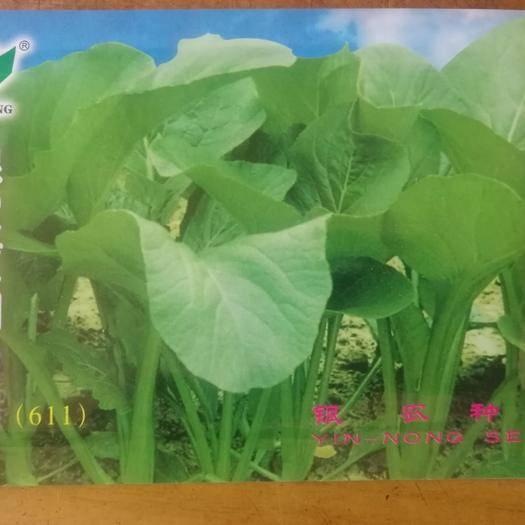 漳州南靖县 闽南油菜种子