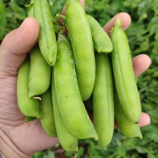 老河口市 新鮮豌豆莢 豌豆角 甜豌豆 量大 上貨快