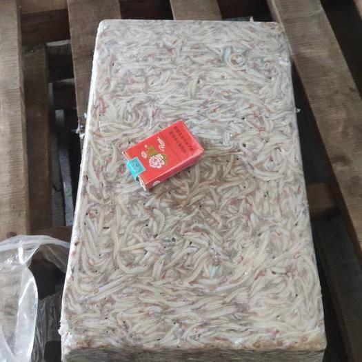 威海荣成市沙里钻鱼 超级新鲜,刚刚下船,干冻25斤一板