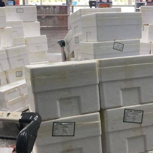 内蒙古自治区包头市昆都仑区 沙葱,精品10斤装