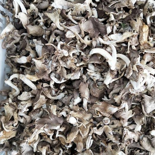 利川市 干秀珍菇