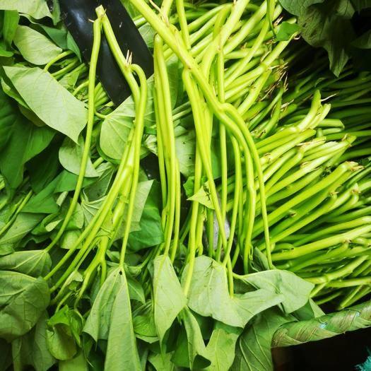 南宁武鸣区红薯梗 红薯藤,18福薯藤种子