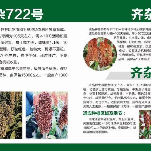 哈爾濱道里區 早熟矮稈高粱種子