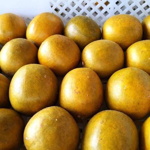 桂林永福县 真空黄金低温脱水罗汉果大果礼盒装  一盒8个 桂林永福特产