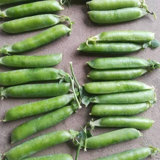 新野縣 春豌豆角上市了