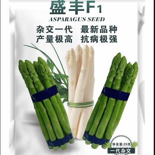 曹县芦笋种子 高产芦笋杂交种盛丰f1