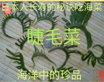 迁安市 盐渍 睫毛菜眉毛菜海洋中的珍品日本人长寿的秘诀吃海菜一斤包