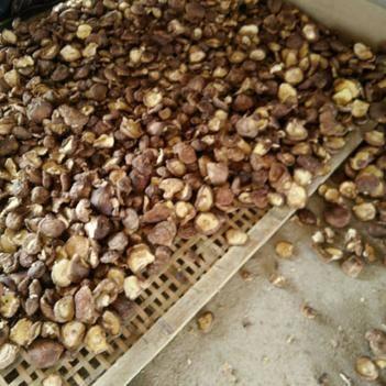 东北干香菇