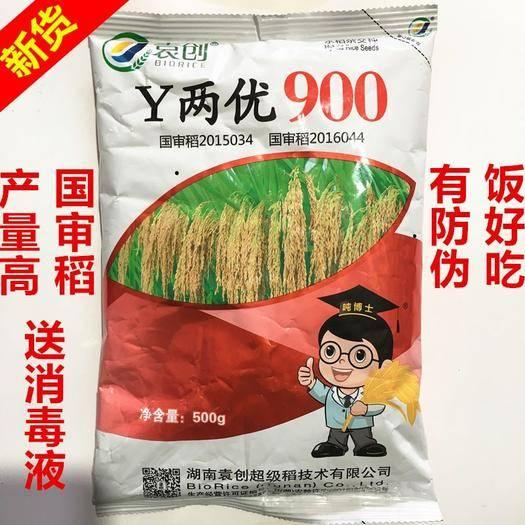 南昌南昌县 390水稻种子Y两优900水稻种子亩产1800斤