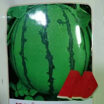 花皮西瓜种子  (含糖13度)早熟福园一号西瓜种子抗病性强甜度高口感好吃好卖