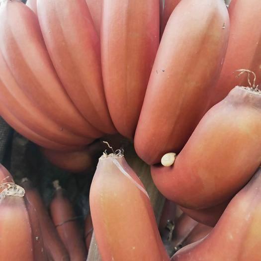 南宁火龙蕉 八成熟