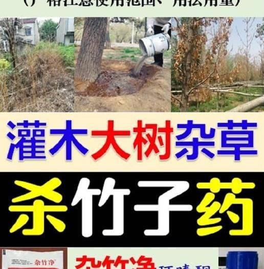 合肥肥东县 环嗪酮特杀竹子树杂草管12个月喷雾施撒灌根非种植用地使用