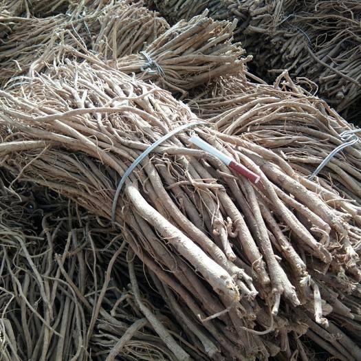 宕昌縣 甘肅鼎盛特色合作社自己種植的黃芪,規格毛芪價格便宜含量達標