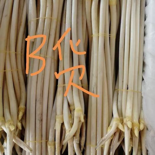仙桃市 笔尖二级仙 藕带藕尖藕梢直供应