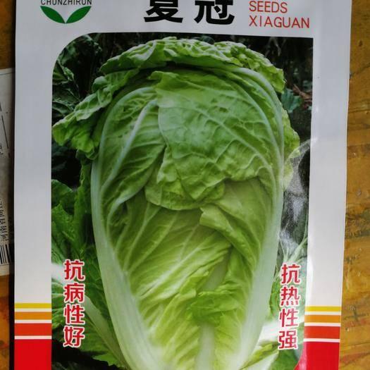 郑州 耐热,稳定,包芯严!夏冠白菜种子,夏天的白菜种子 亩4袋