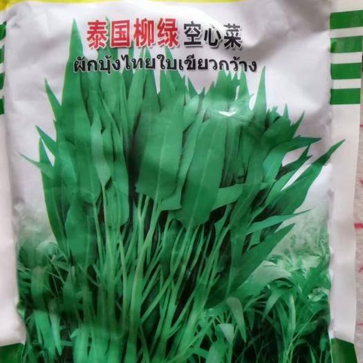 商丘夏邑县 泰国柳绿空心菜种子 适应性广 耐旱耐劳 抗病高产500克