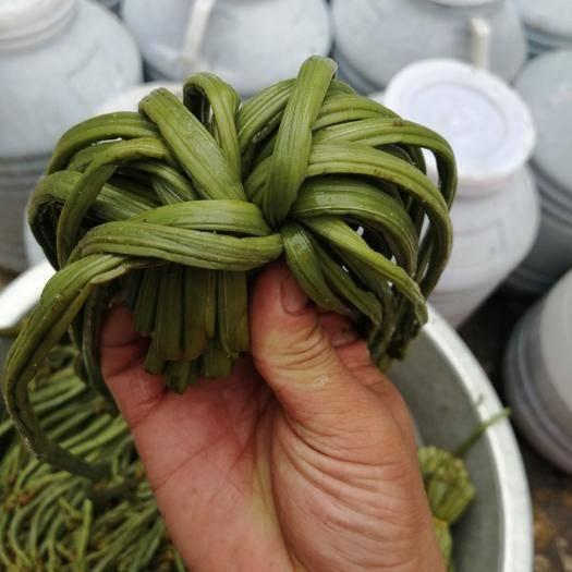 六盤水六枝特區 鹽漬蕨菜