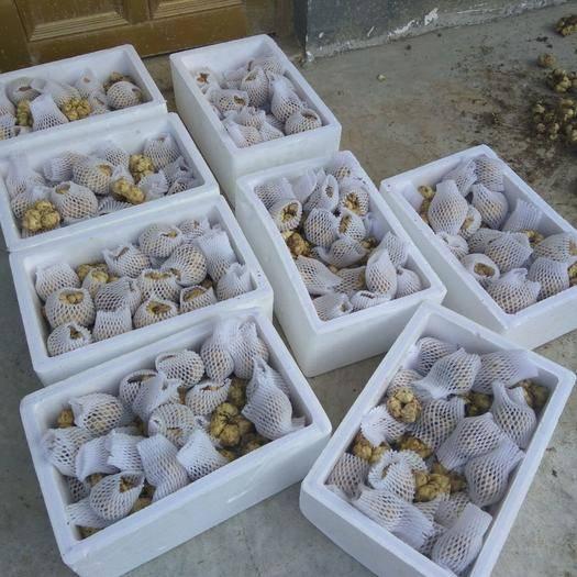 宣汉县 四川食用鲜百合 包邮19省市7.5斤一件可发 可来自挖自运