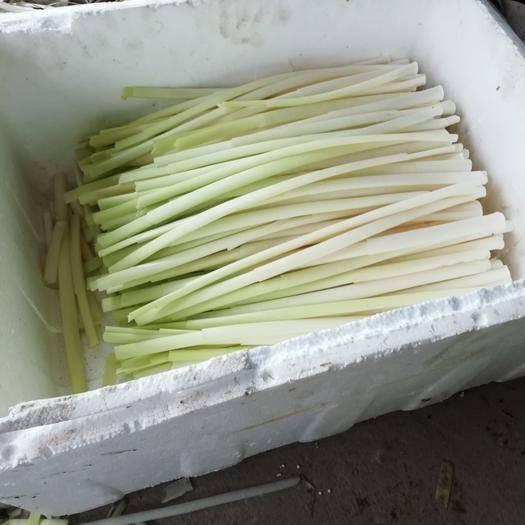 扬州蒲菜 优质水源生长!提供基地参观机会
