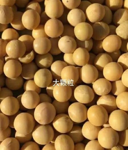 齐齐哈尔依安县 大颗粒6.6长孔,分粒机分的大豆