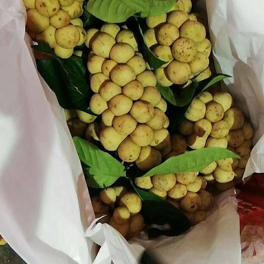 凭祥市龙功果  龙宫果,甜而不酸,口感佳,吃了还想吃的水果