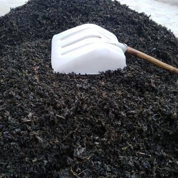 野生地皮菜过筷无土杂包邮一次买200斤送土蜂蜜2斤