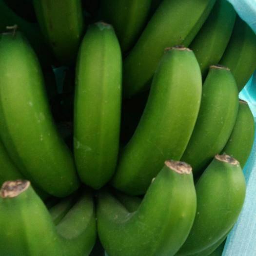 文山文山市河口香蕉 八成熟