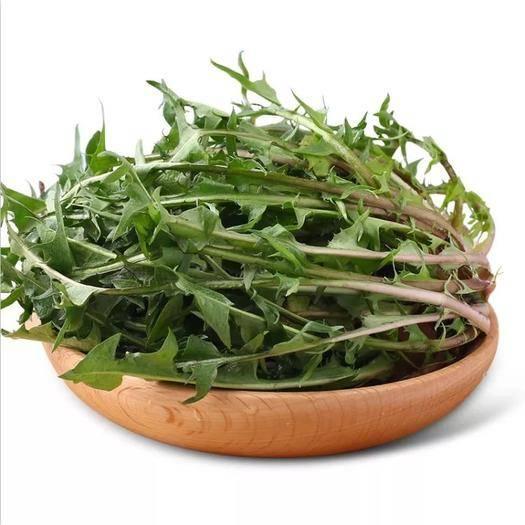 吉林省白山市抚松县蒲公英(鲜食) 野生新鲜蒲公英带根鲜婆婆丁 野菜蔬菜 很嫩直接生吃1000g