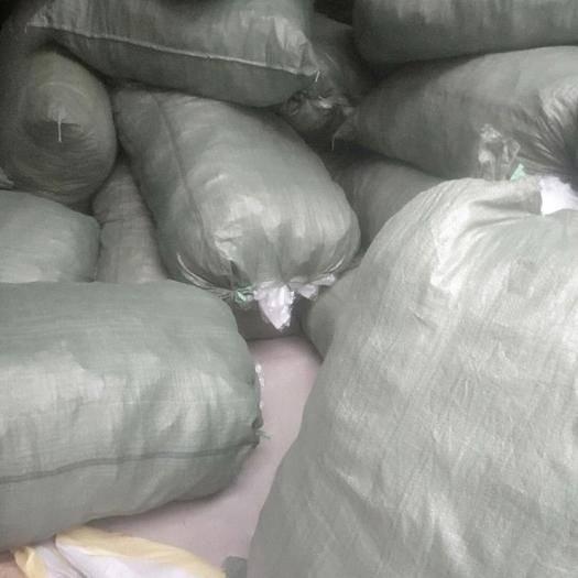 玉林網袋  番石榴套袋