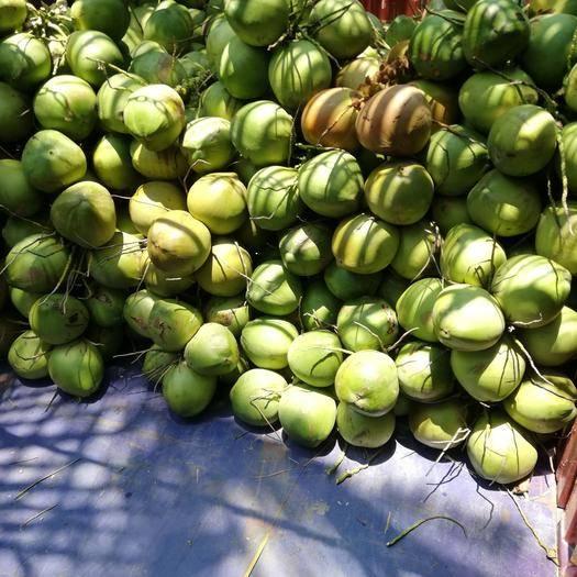 文昌市高种椰子 树上水,海南椰青厂家直销价打包寄物流2.8一个,