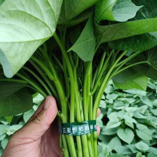 三亞紅薯葉 苕尖  番薯葉