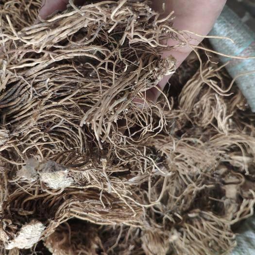鄄城縣 藜蘆 黑藜蘆 山蔥   水洗貨