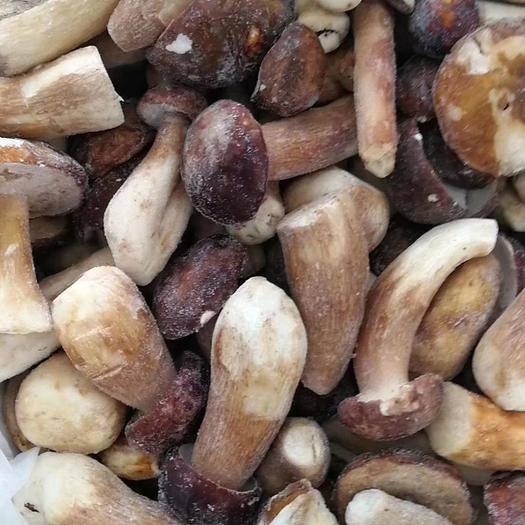 上海市宝山区杏鲍菇菇脚 鲜杏鲍菇 特级 6cm以上