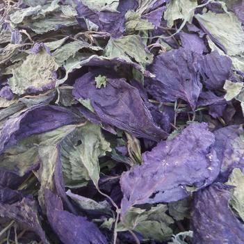 紫苏叶,全检。大货批发零售。大货可优惠。