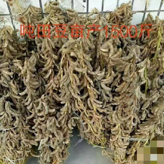 郑州黄豆瓣 高黄豆种子端进口种子