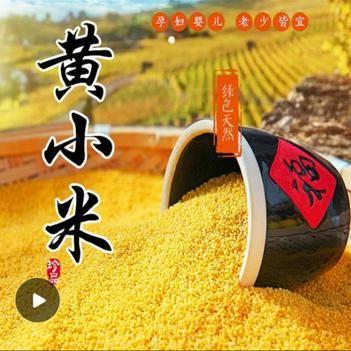 黄小米养胃佳品孕妇月子老人孩子必备营养丰富