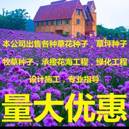 宿迁沭阳县 柳叶马鞭草种子花草种籽耐热多年生四季耐寒菊花坪
