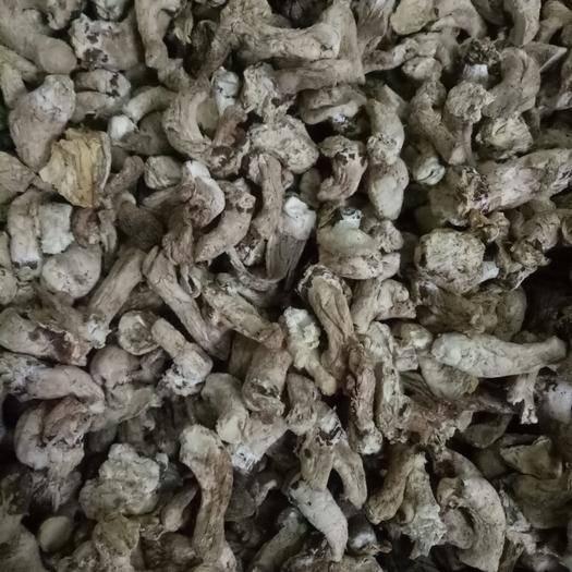 黑龙江省牡丹江市东宁市香菇脚 精选香菇腿,单剪