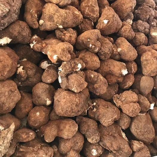 怀化靖州苗族侗族自治县茯苓菌种 本厂提供优质高产菌种,长期技术指导,大量收购鲜茯苓。
