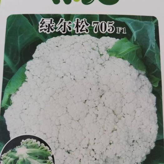 诸城市白花菜 精品有机绿梗松花种子
