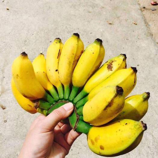 南宁金陵香蕉 金陵小米蕉